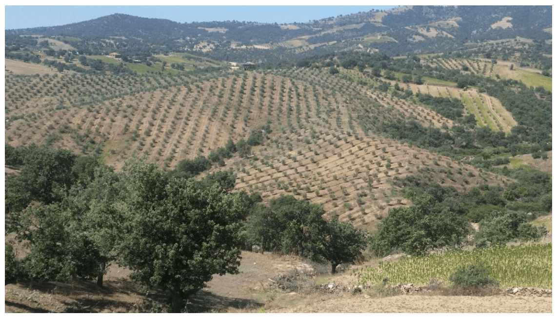 Manisa Active Farm & Olive Grove 168.000 m2